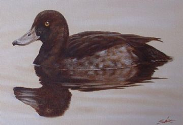 John Silver Original Oil Painting Of A Female Tufted Duck
